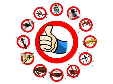 дезинсекция от насекомых в бытовке