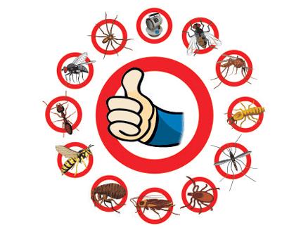 дезинсекция от насекомых в комнате