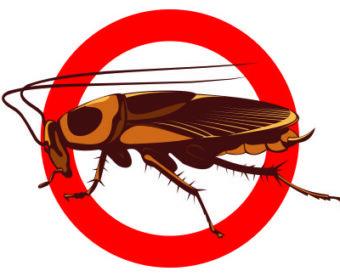дезинсекция от тараканов в бытовке