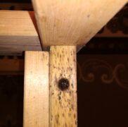 гнездо тараканов  в столе